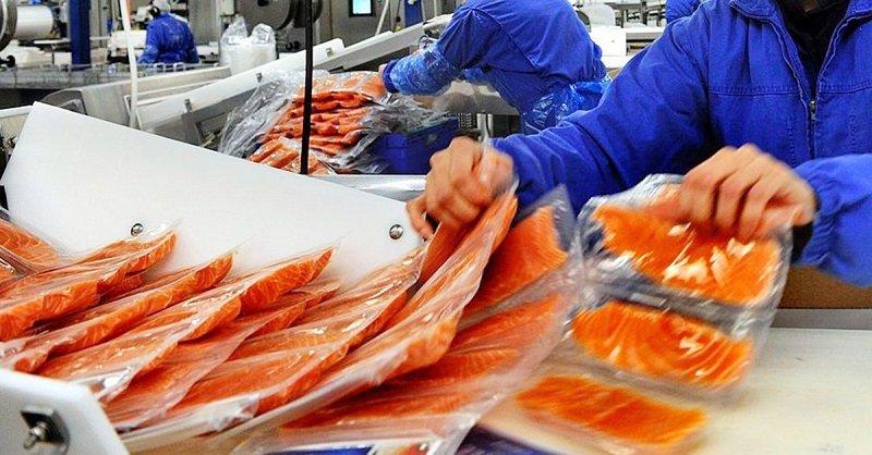 норвежский лосось фото