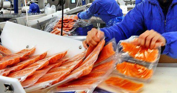 Рыба массового поражения! Вся правда о норвежском лососе.
