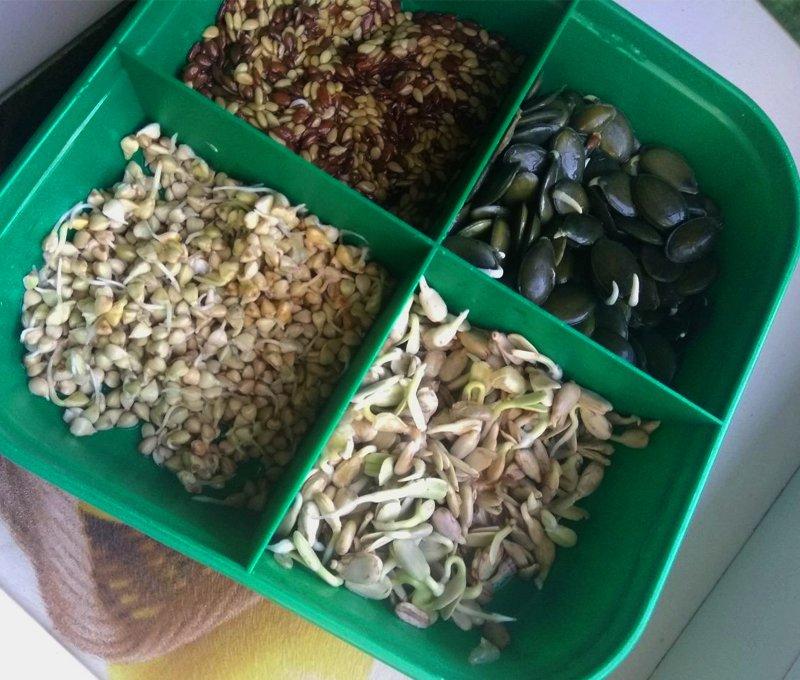 проращивание семян подсолнечника