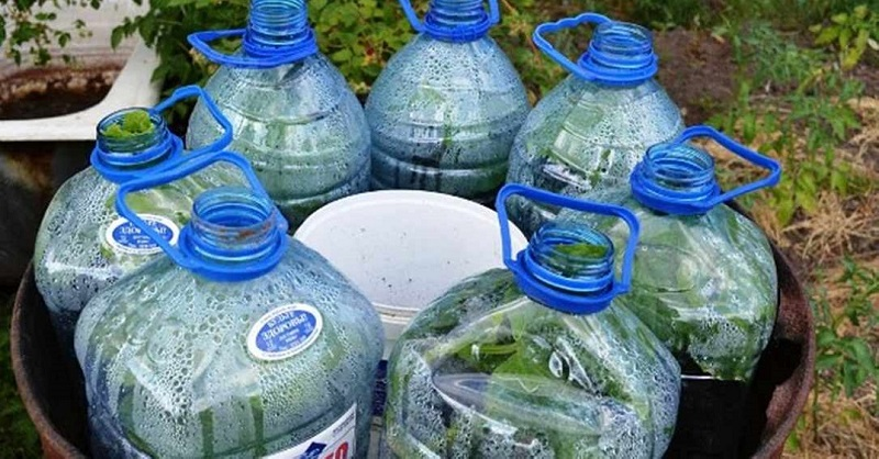 огурцы в бутылке