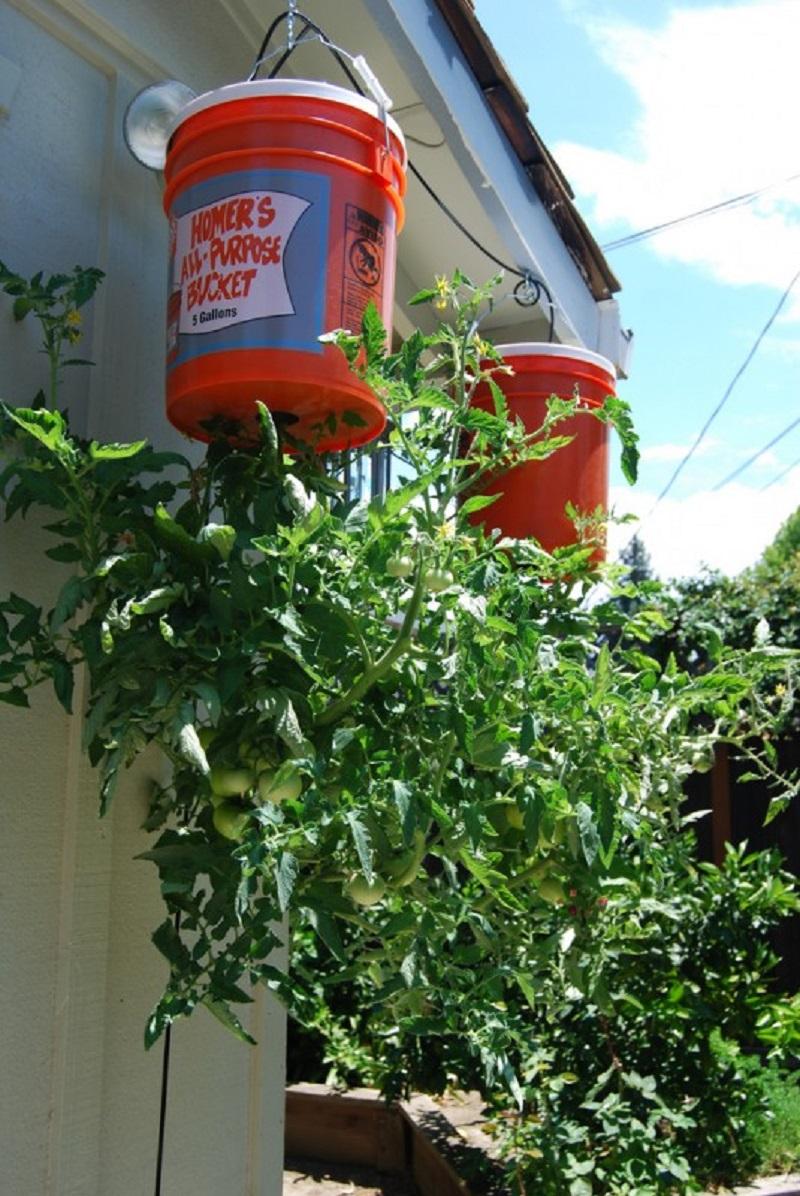 растения на балконе фото