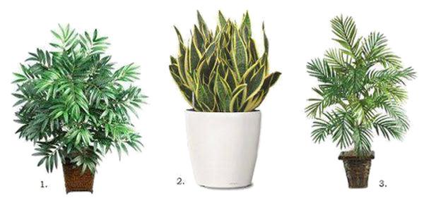 Эти растения — прекрасная альтернатива магазинным очистителям воздуха. Зачем платить больше?