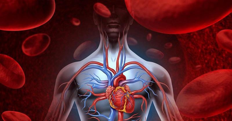 регуляция работы сердца