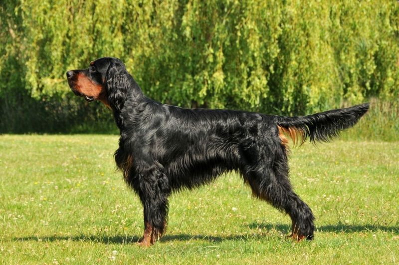 рейтинг домашних собак