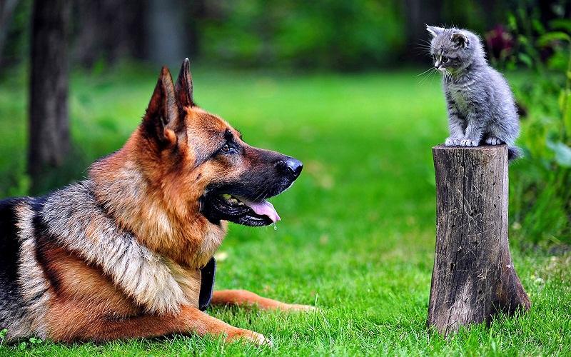 рейтинг собак по обучаемости