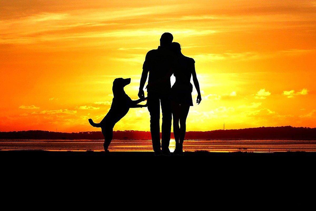 Почему стоит завести собаку, если жена предала и ушла Вдохновение,Советы,Животные,Любовь,Питомцы,Собаки,События,Судьба,Удача