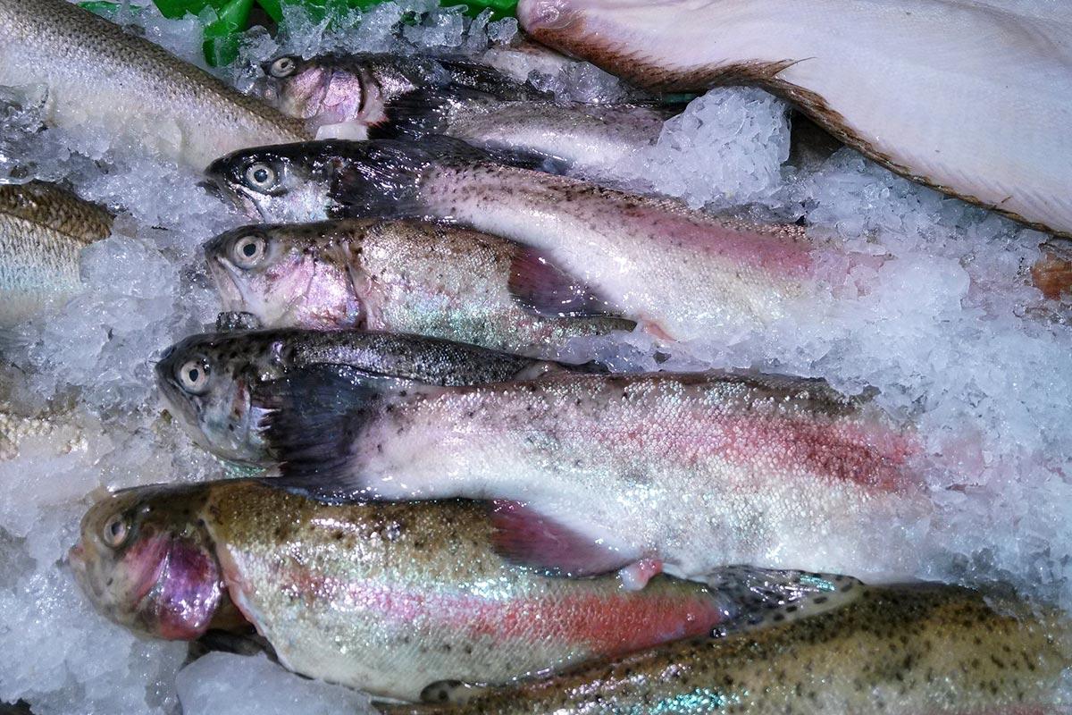 вкусная рыба на пару