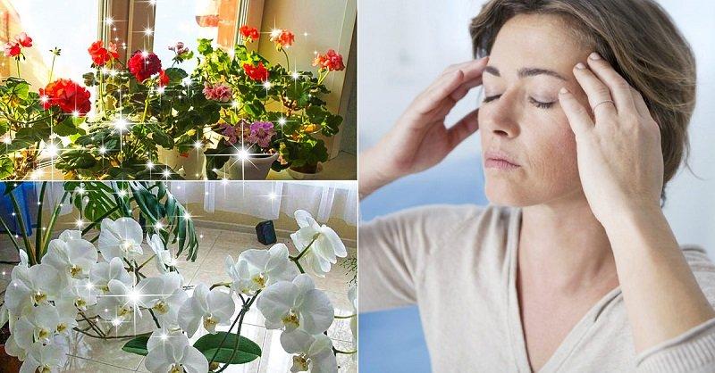 Комнатные растения, что могут стать причиной головной боли