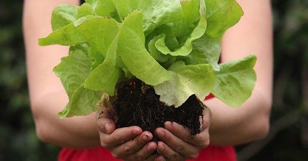 10 самых полезных продуктов питания в природе. Настоящая сокровищница витаминов!