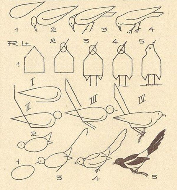 как нарисовать сороку