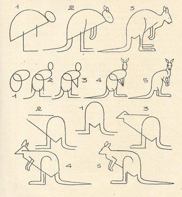 как нарисовать кенгуру