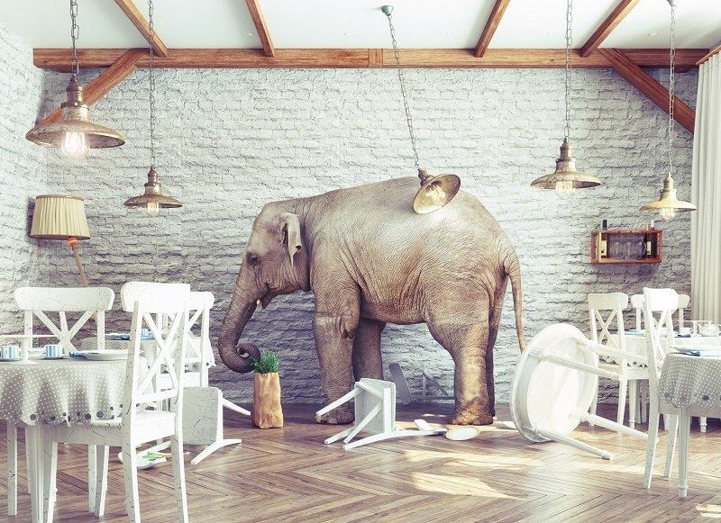 слон в посудной лавке