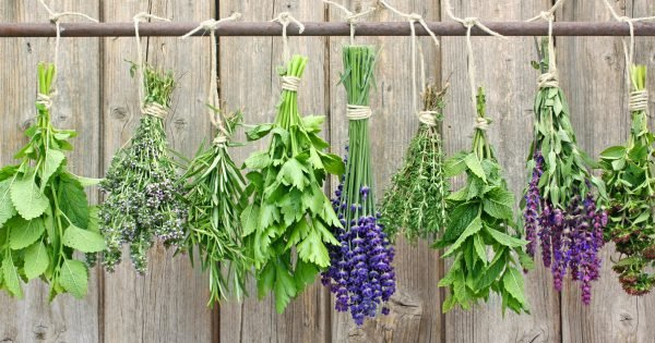 Various fresh herbs hanging on a rusty iron rod