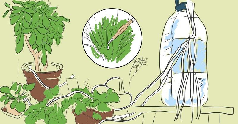 полив растений в отпуске
