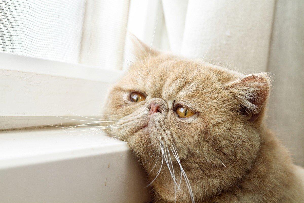 сколько спят коты зимой