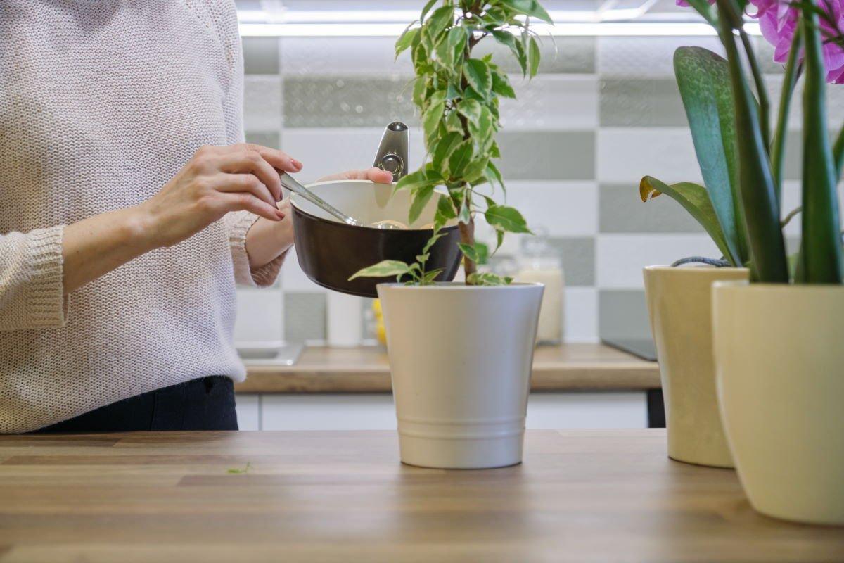 Скорлупа как удобрение для комнатных растений
