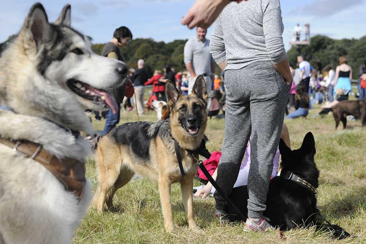 Самые верные породы собак, что могут однажды спасти твою жизнь