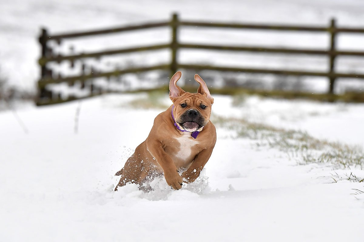 Самые верные породы собак, что могут однажды спасти твою жизнь собак, овчарка, породу, собака, питомец, породы, чтобы, хорошо, собаки, людям, нужно, нуждается, будет, просто, никогда, Однако, только, детьми, дрессировке, немецкая