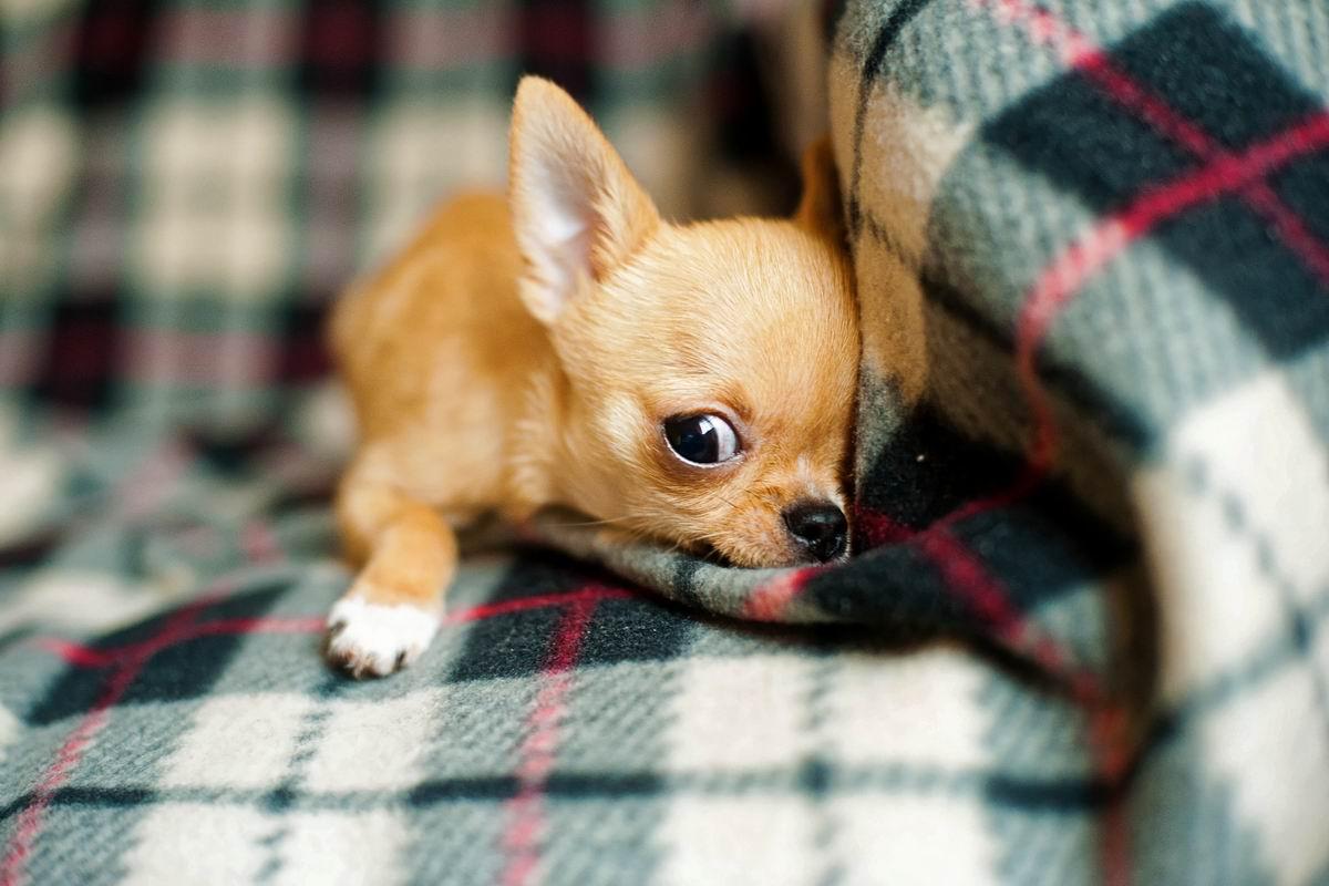 Каких собак нельзя заводить, если в доме растет ребенок Советы,Дети,Животные,Питомцы,Семья,Собаки
