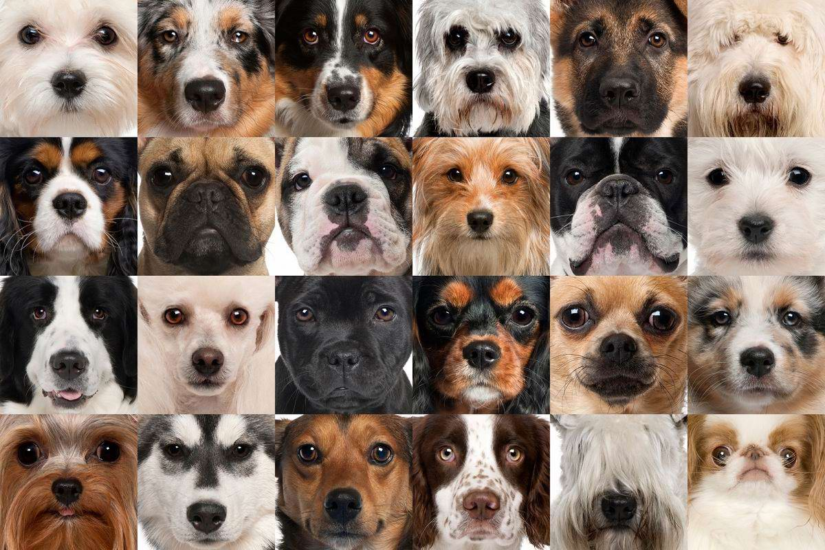 Пожилой собаковод рассказал, какие породы собак живут долго