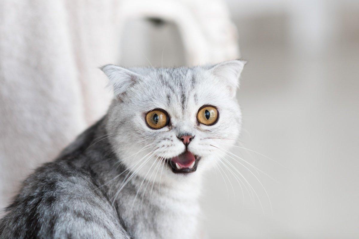 изоляция кошки