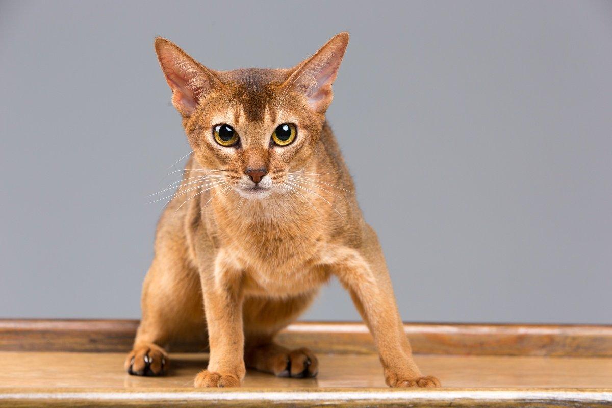 можно ли наказывать кошку