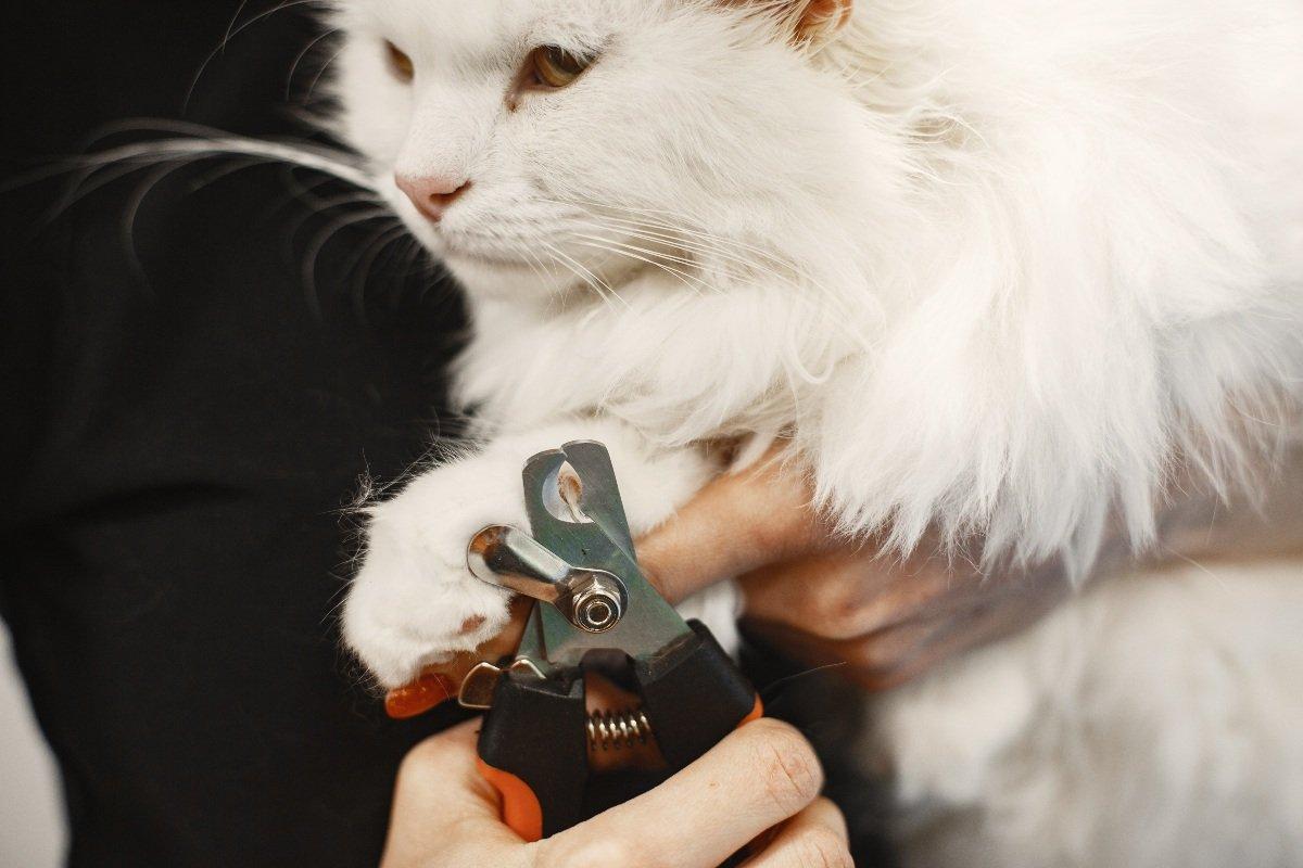 содержание кошек дома