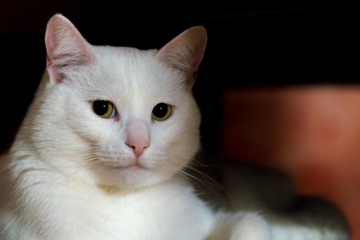 содержание кошек в квартире