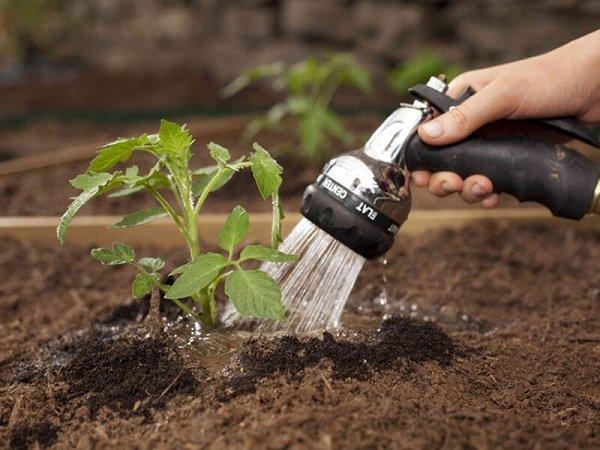 полив растений