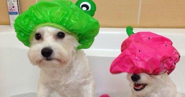 15 советов, которые сделают счастливой твою собаку. И тебя в том числе!