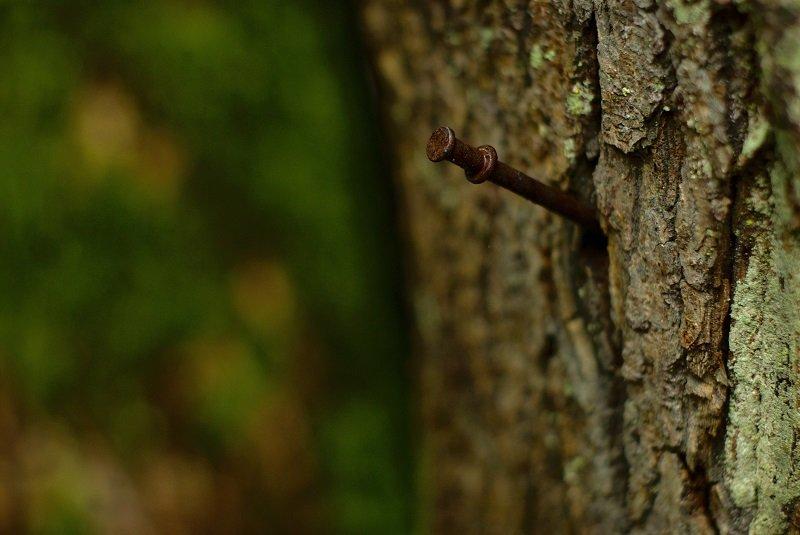 гвоздь в дереве