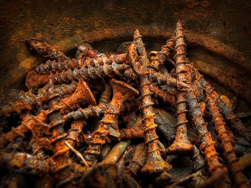 Новости PRO Ремонт - 9 великолепных советов для садоводов, о которых ты наверняка раньше не слышал! ржавые гвозди