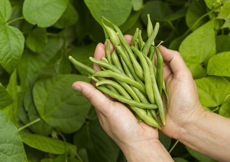 Новости PRO Ремонт - Эти овощи жить друг без друга не могут, только рядом! Такое соседство принесет… овощи на грядке