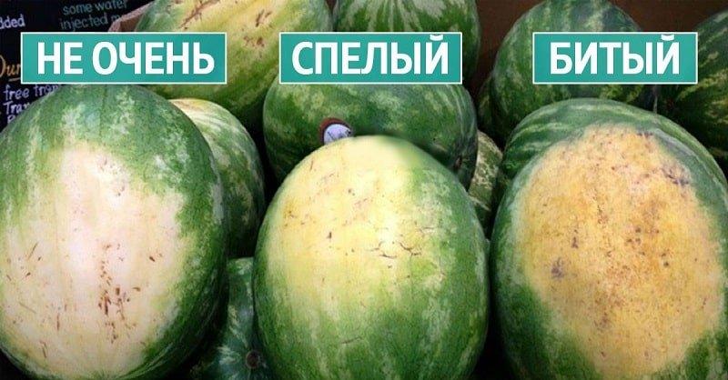 покупка арбуза