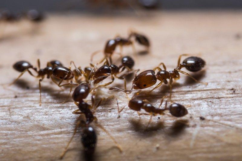 средство от муравьев