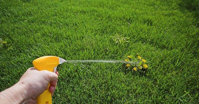 безопасные средства от сорняков