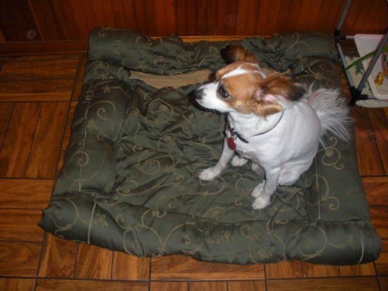 что можно сделать из старого шерстяного одеяла