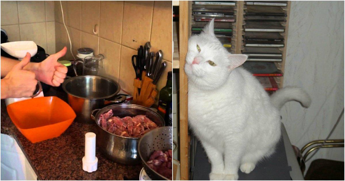Корм для кошек своими руками рецепты 889