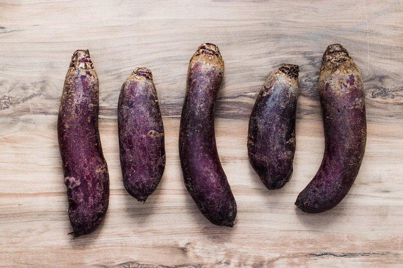 выращивание свеклы в беларуси