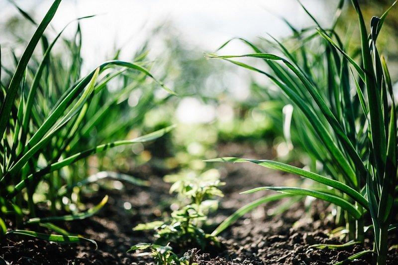 выращивание свеклы бизнес