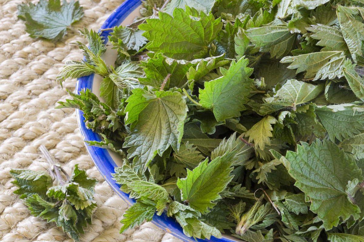 Бабушкин салат из крапивы, рецепт дала сердобольная женщина в поликлинике