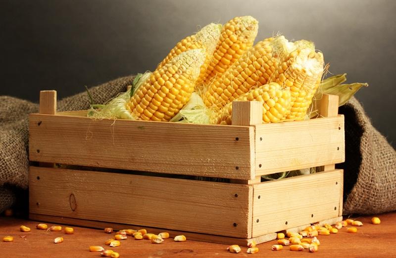 кукурузные рыльца польза