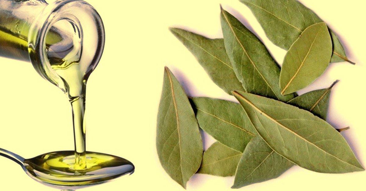 Чудо-средство от ста болезней: невероятные свойства лаврового масла.