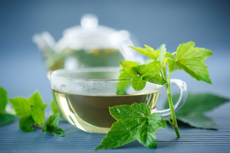 vlastnosti čaju z listov čierneho ríbezle