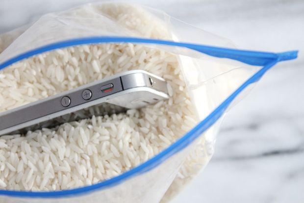 биологические свойства риса