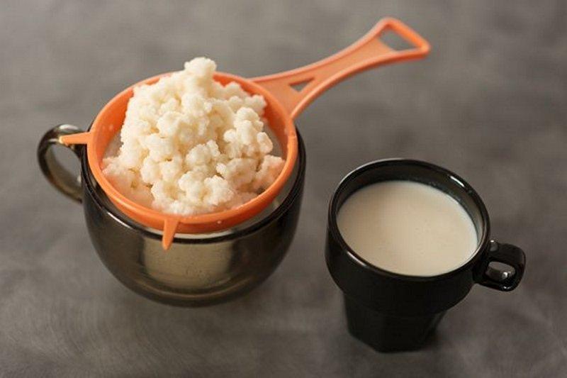 Чем полезен тибетский молочный гриб здоровье