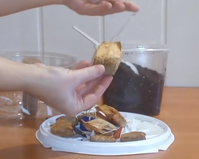 торфяные горшочки своими руками