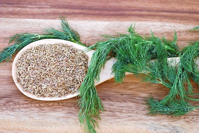лечебные травы для желудка и кишечника