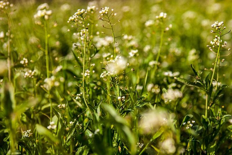 лекарственные травы для женского здоровья