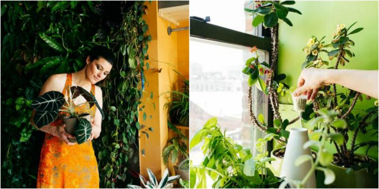 droždie pre izbové rastliny